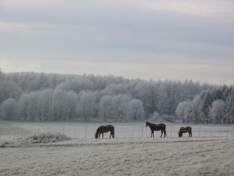 Single westerwald